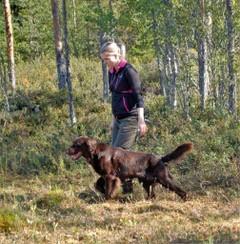 Hundjaktsäsong slut men träna din hund för kommande premiärer, del II